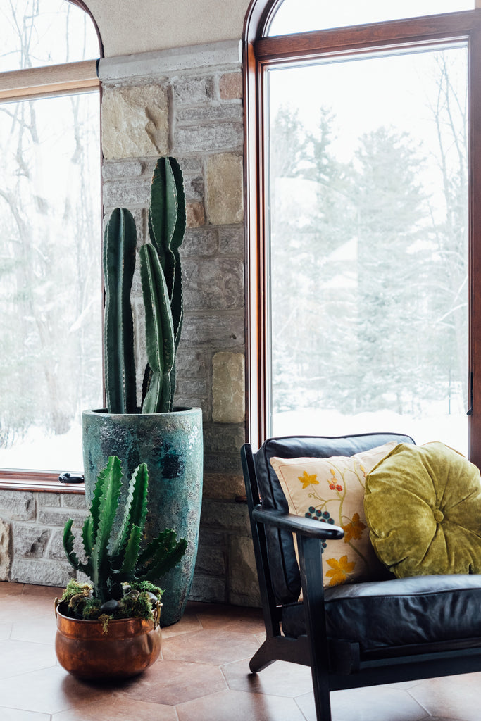 Ottawa Sunroom armchair and cacti
