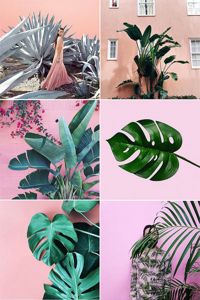 SPRING INTERIOR DESIGN COLOURS - Plants on Pink