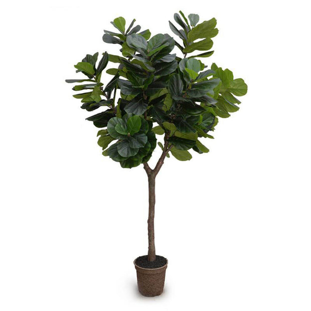 The Fiddle Leaf Fig Tree is a realistically looking fake tree in a mache pot and is 10 feet tall.