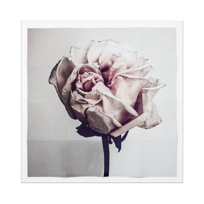 The Flora Fragmenta Rosae Imperfectae is a photograph of a delicate rose shot by Andrew Soule. Soft and neutral wall decor.