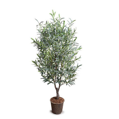 The Faux Olive Tree has slender, silvery gray-green leaves and is 5 feet tall.