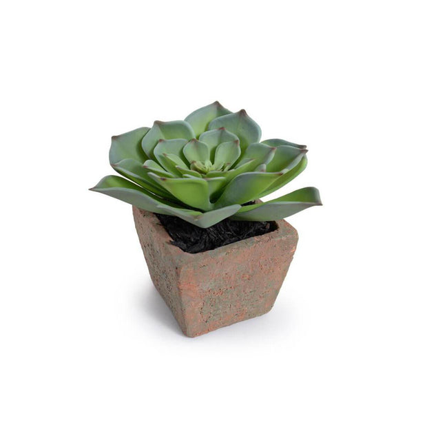 The Potted Succulent - Echeveria is a small fake succulent with a terra cotta pot.