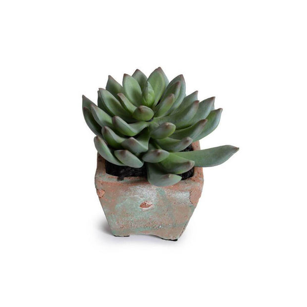 The Potted Succulent - Pachyphytum is a realistic looking, artificial succulent with a square terra cotta pot.