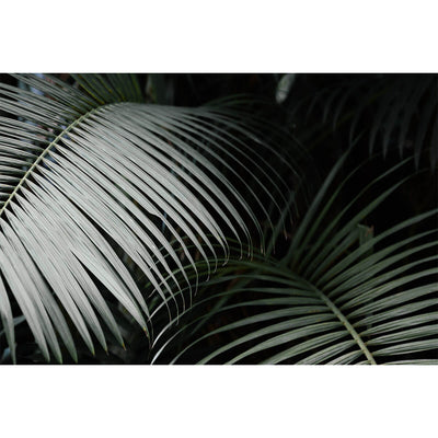 Rio De Janeiro - Palms is a moody photograph of dark palm leaves by artist Brendan Burden.