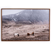 Wild Horses is a landscape photo of wild horses in Iceland and is printed on watercolour paper with a walnut frame.