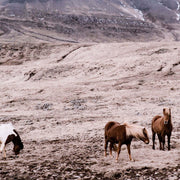Closeup of the wild horses and mountains in the photography art.