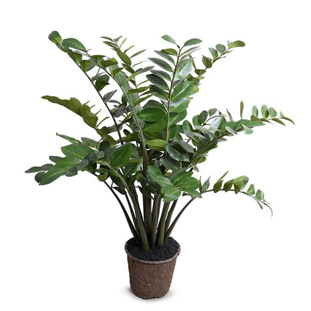 The large Zamiifolia Plant is a fake plant with long arching stems with rounded, glossy leaves.