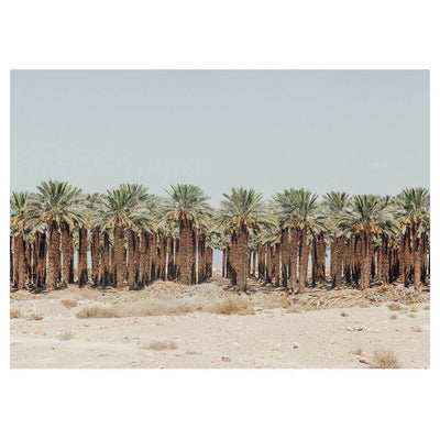Israel - Palm Trees is a landscape photograph of palm trees in Israel by artist Brendan Burden.