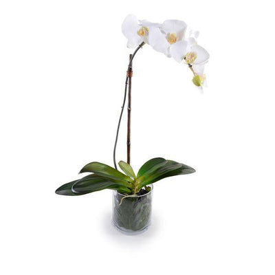 The faux Orchid plant has six white flowers and a glass vase with a realistic looking stem and leaves.