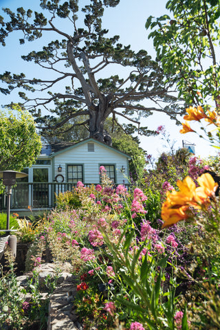 SkinHappy Clinic with flowers and Cypress tree