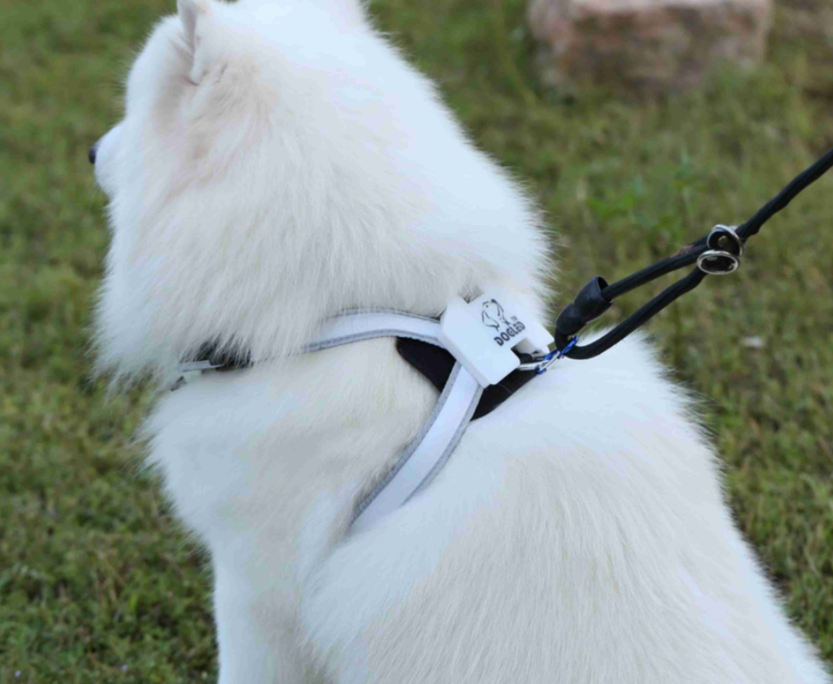 Revolutionary Illuminated Reflective Harness for Dogs Multicolored LED