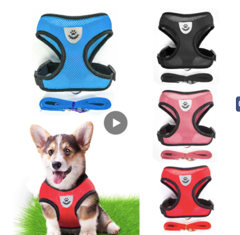Everyday Breathable Harness Leash Set