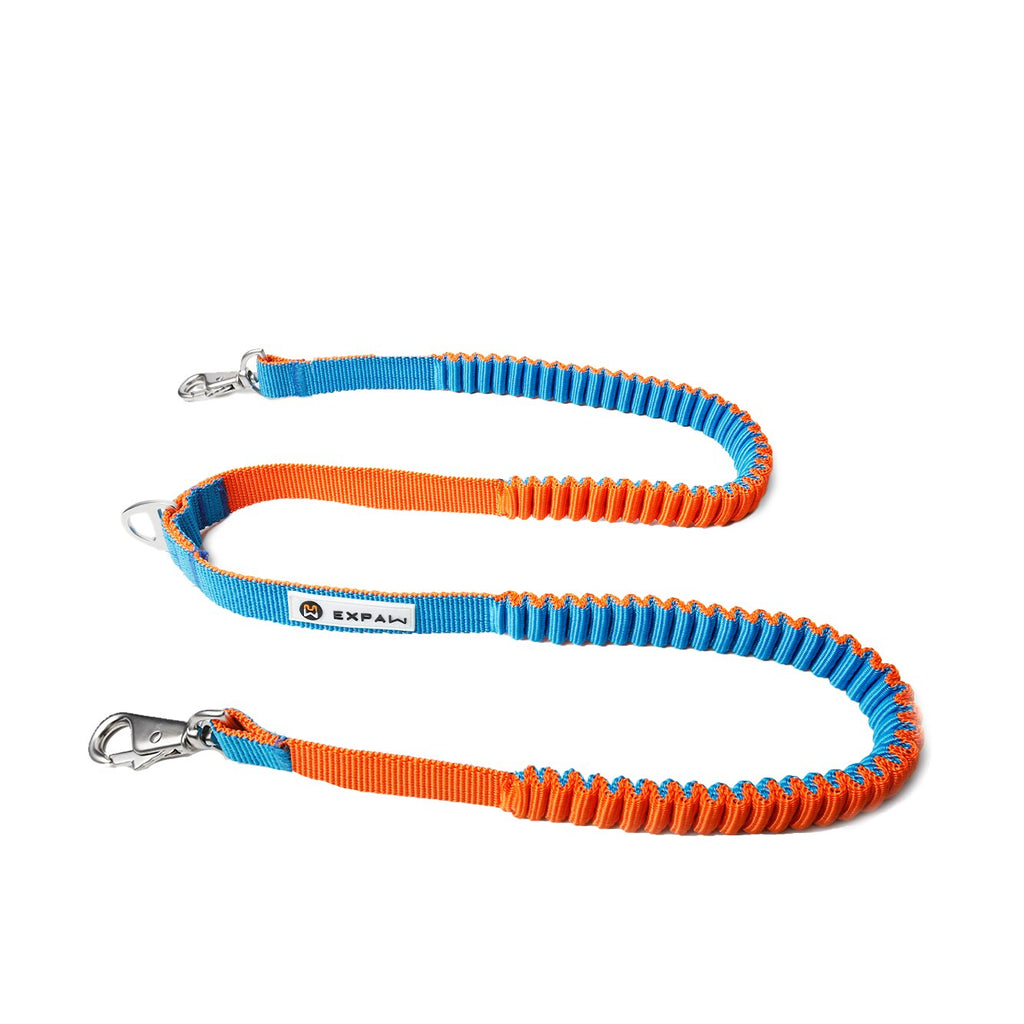 Absorbing Shock Bungee Leash