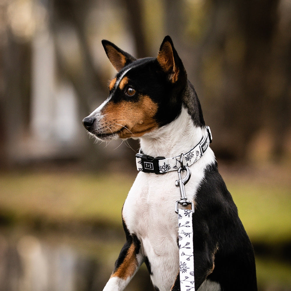 Load image into Gallery viewer, Black Baccara Combo (collar & leash)