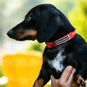 Fresh Watermelon dog collar