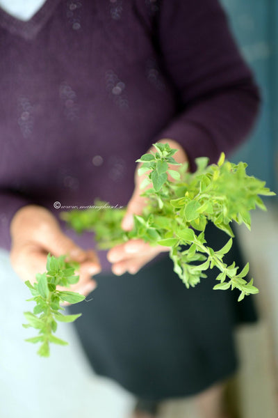 Highest Quality Handpicked & Wild Oregano from Mountain Taygetus
