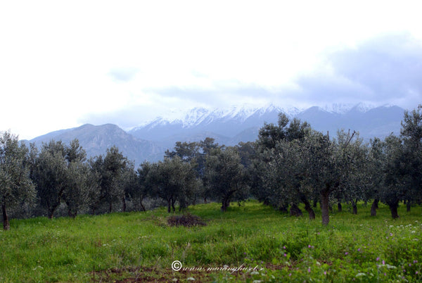 Your Own Olive Tree in Greece and Get Olive Oil from YOUR Tree