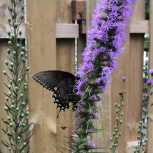 Load image into Gallery viewer, Butterfly Nectar Plant Pack