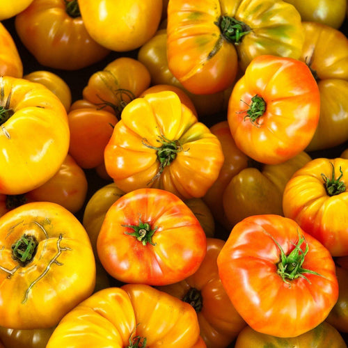 German Striped Yellow Heirloom Tomato