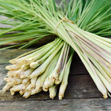 Load image into Gallery viewer, Lemongrass Plants