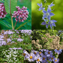 Load image into Gallery viewer, Pre-planned shade pollinator garden