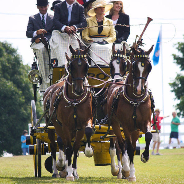 Concours D'Elegance Custom Carriage Harness