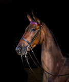 Stake Night Weymouth Double Bridle