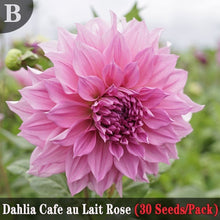 Load image into Gallery viewer, 5 Kinds of Dahlias Seeds (30 Seeds/Pack) Garden Potted Ornamental Flower Seeds Balcony Bonsai Flower Plants