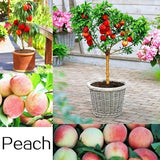 Mixed 300pcs Fruit Seed Plants Bonsai 25 Kinds of Delicious Fruit Tree Seeds for Home Garden to Plant Easy to Grow