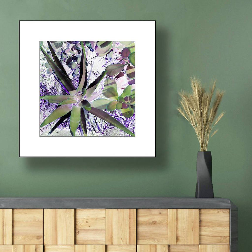Purple Agave Garden, print with white mat, 12x12 inch. Home Delphine B Photography