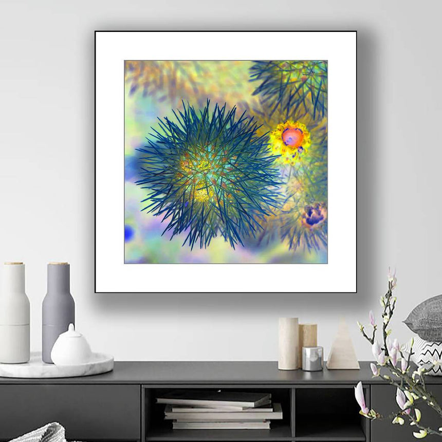 Desert urchin, print with white mat, 16x16 inch. Home Delphine B Photography