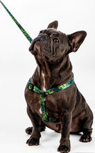 Load image into Gallery viewer, 6ft Green Spiral leash