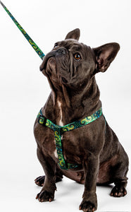 6ft Green Spiral leash