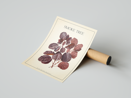 The Smoke Tree