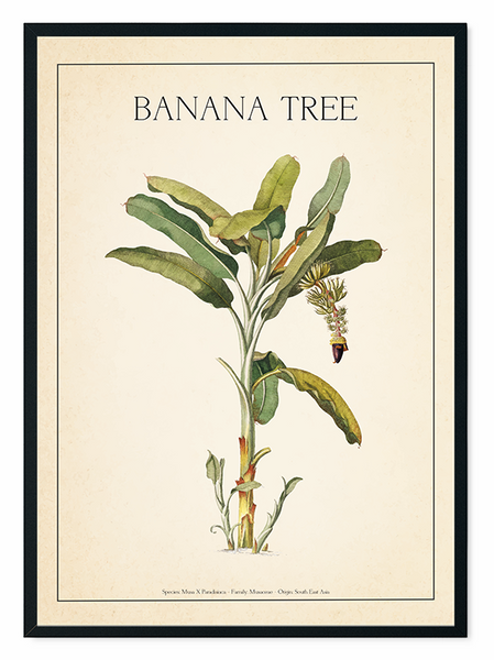 The Banana Tree