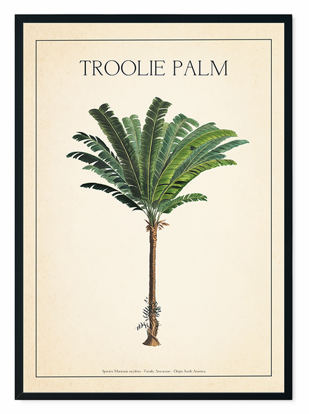 The Troolie Palm