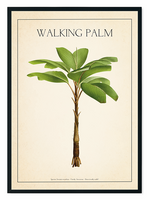 The Walking Palm