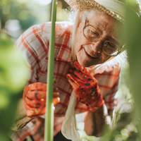 An older woman gardening. She is wearing a checkered white and red shirt, pretty orange gardening gloves, a lovely straw hat and bonnet. She is crouched over examining a vine in her garden.