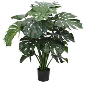 10Pcs Garden Balcony Decoration Beautiful Bonsai Plants Monstera Seeds