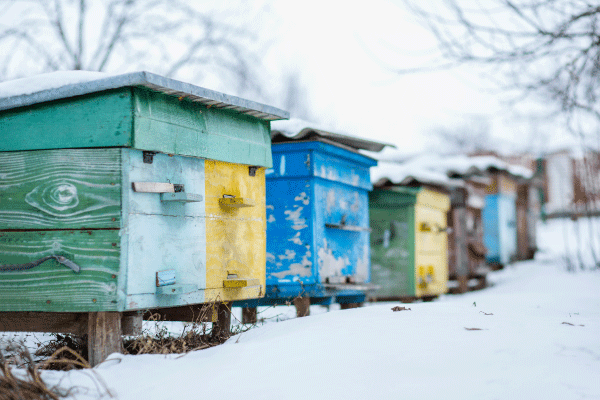 Bee Hive in Snow