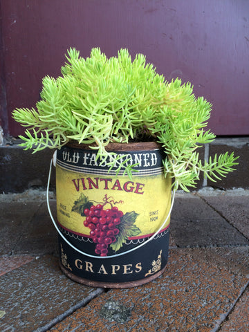 Funky succulents in paint tins