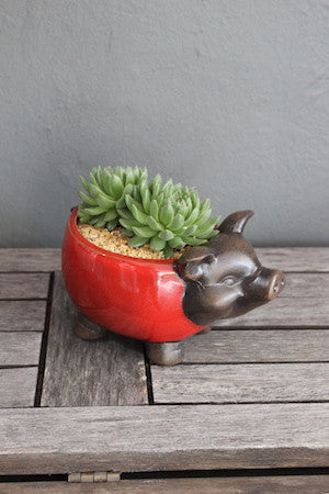 Succulent with animal pot