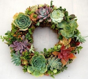 Bright Succulent Christmas Wreath