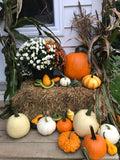 Fall decoration packages