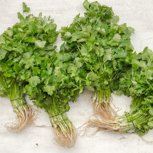 Coriander (by the box