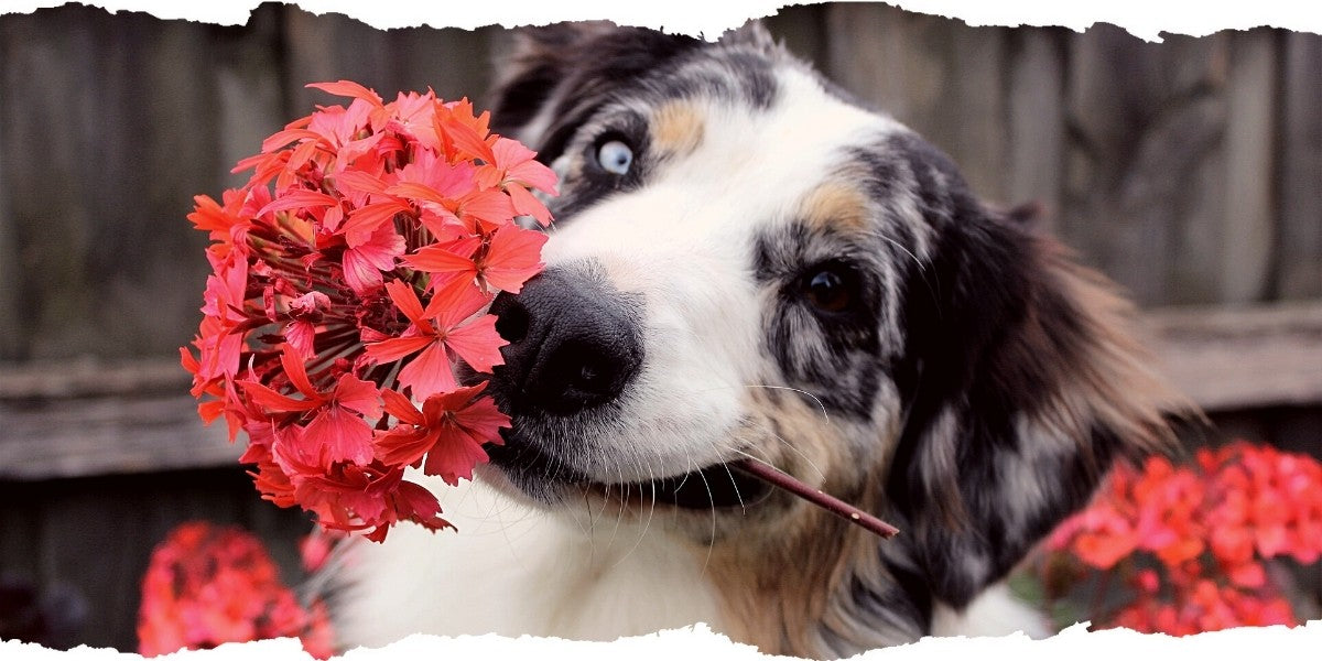 Happy Dog with Flower