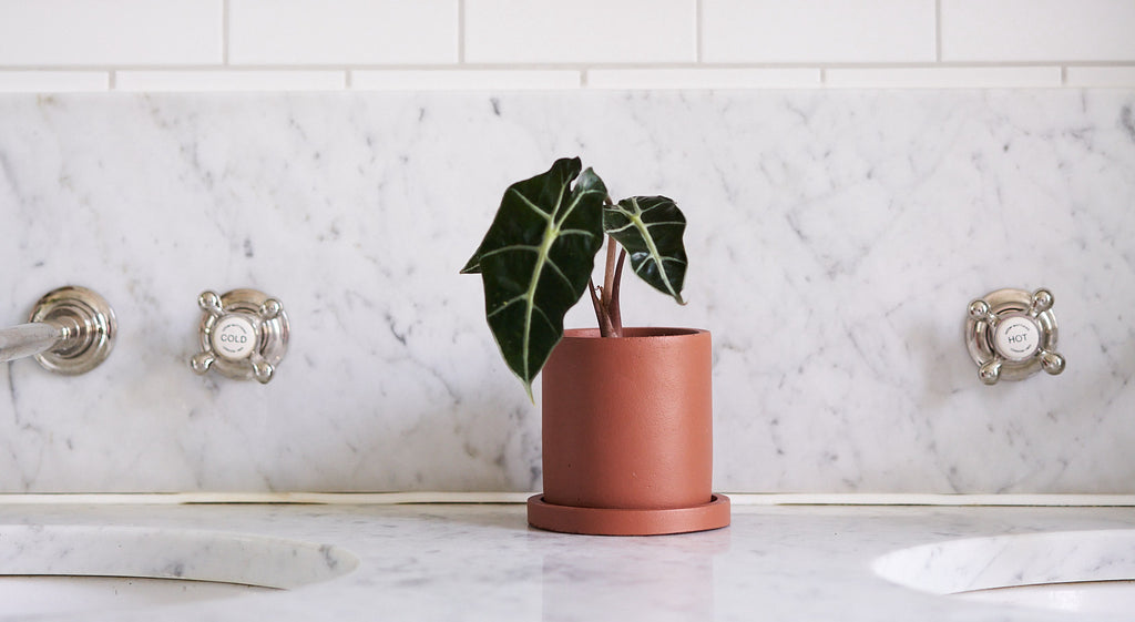 Potting 101: How (and when) to repot your houseplant