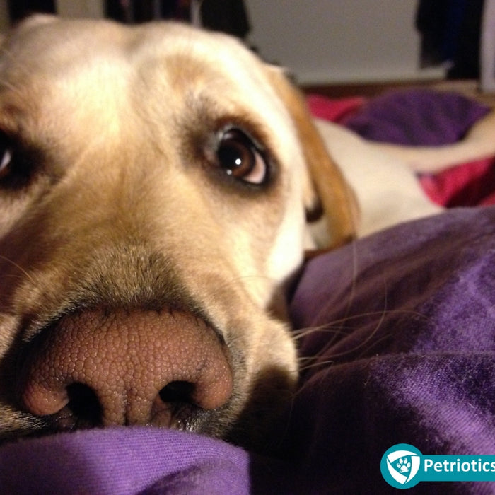 Tips & Tricks To Manage Separation Anxiety In Dogs