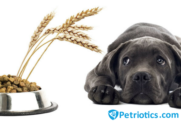 Should You Feed Your Dog Grain-Free Food?