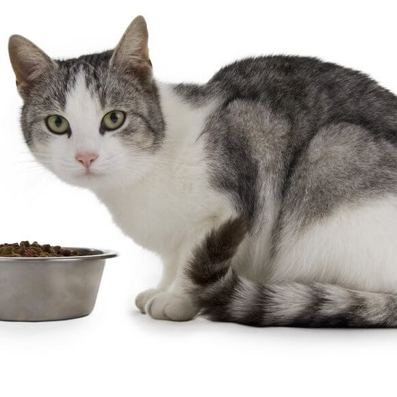 3 Top Cat Food Choices on a Budget